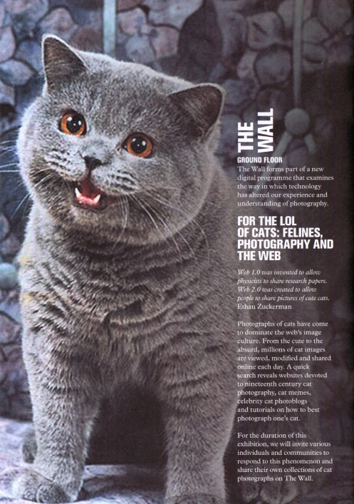 For The LOL Of Cats: Felines, photography and the web?